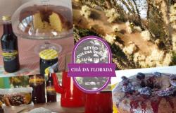 Chá da Florada celebrará a boa safra neste domingo próximo da Cachoeira do Prata em Juscimeira