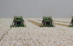 Indea realiza palestras de prevenção do bicudo do algodoeiro