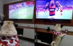 Cão comemora gol na TV e vira xodó da torcida do Flamengo.