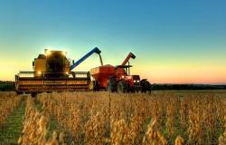 Produtores de Mato Grosso começam a colheita da soja,