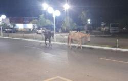 Cavalos são flagrados andando pelo centro da cidade em São José do Rio Claro