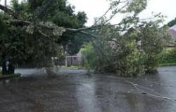 Instituto prevê temporais com queda de árvores, raios e cortes de energia em MT; veja cidades