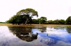 Plano de ação emergencial em defesa do Pantanal será apresentado nesta sexta-feira