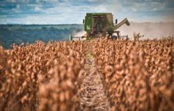 Problemas em safras da América do Sul reduzem estoques de soja e milho dos EUA