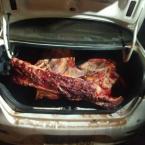 Quadrilha mata vaca e faz descarne à beira de estrada; PM flagra crime