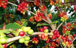 Alta do dólar estimula negócios com café, diz Cepea