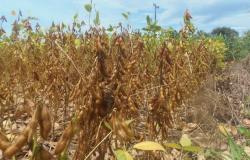 Volta do sol permite produtor retomar a colheita da soja
