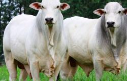 Preço do boi gordo sobe até R$ 6 por arroba em fevereiro