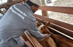 Caso de raiva bovina é identificado em Sorriso-MT e 200 propriedades terão que vacinar rebanho