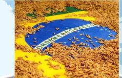 México flexibiliza importação do arroz em casca do Brasil
