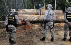 Força Nacional vai atuar para conter queimadas na Amazônia