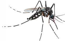 Fiocruz retoma projeto com mosquitos que combatem a dengue