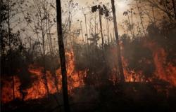 Junho registra maior número de queimadas na Amazônia em 13 anos