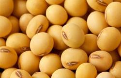 Brasil retoma posto de maior produtor de soja do mundo