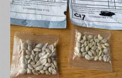 China está enviando sementes pelo correio sem solicitação