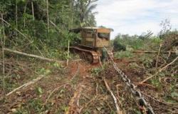 Liminar proíbe uso de 'correntão' em desmatamentos