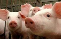 Importações de carne suína pela China têm recorde em julho
