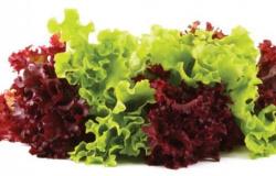 Benefícios da alface e informação nutricional