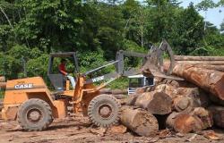 Ibama atualiza sistema digital antifraude para controle da madeira