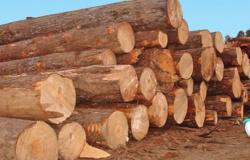 Marcelândia: Fazendeiro apontado como um dos maiores desmatadores do país é autuado pela PF e Ibama
