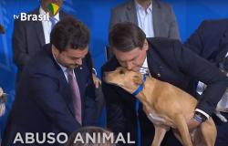 Bolsonaro sanciona lei que aumenta pena de maus-tratos a cães e gatos