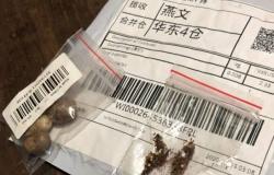 17 estados do Brasil já receberam as sementes misteriosas da China