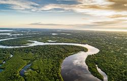 Se o desmatamento mundial seguir no ritmo atual, Brasil será dono de quase metade das florestas primárias do planeta