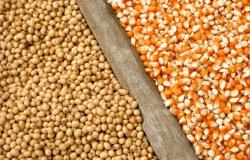 Brasil zera temporariamente imposto de importação para soja e milho