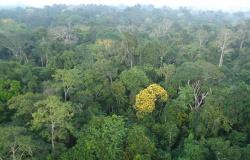 Desmatamento na Amazônia cai 70% em janeiro, na maior queda dos últimos 4 ano