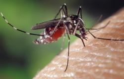 MT tem 34 cidades com risco alto para dengue, zika e chikungunya