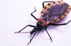 Fiocruz assina acordo de combate à transmissão da doença de Chagas