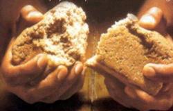Jesus é o pão da vida para os que crêem Jo 6,22-29