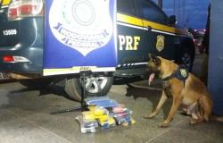 PRF apreende maconha e cocaína com a ajuda de cão farejador em MT