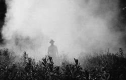 Nos EUA, Monsanto é condenada a pagar multa milionária por herbicida
