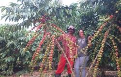 Cerrado Amazônico de Vilhena aprimora produção de Café Especial em Rondônia