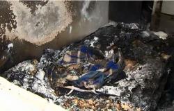Mulher morre carbonizada dentro de casa durante a madrugada