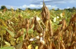 30 DE DEZEMBRO: Produtores rurais devem cadastrar propriedades com plantio de soja