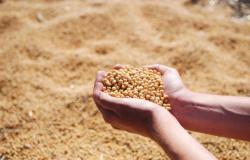 Com avanço da colheita, ritmo de negócios aumenta