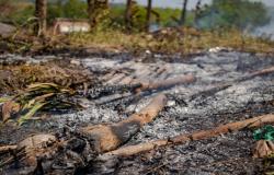 Prefeitura de Porto Velho reforça fiscalização contra queimadas