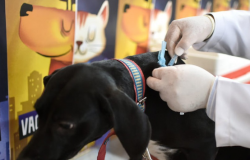 Cães e gatos podem ser vacinados contra a raiva animal a partir desta segunda-feira (20) em Porto Velho