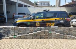 Carga de R$ 70 milhões em cocaína é apreendida em rodovia de MT