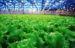#AGRO | As leis que tratam das agroindústrias começam a serem debatidas na Assembleia em Rondônia