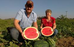 Agricultores investem no cultivo irrigado de melancia como alternativa de renda no Norte de MT