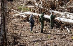 Operação Amazônia aplicou R$ 979 milhões em multa