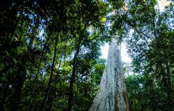 Mato Grosso reduz em 21% alertas de desmatamento