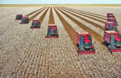 Colheita de algodão em Mato Grosso começa e venda da pluma aumenta