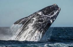 Mulher é esmagada por baleias jubarte e fica gravemente ferida