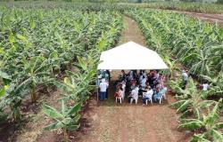 Empaer comemora 56 anos de trabalhos prestados ao desenvolvimento da agricultura em MT