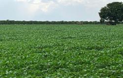 Plantio da soja será liberado esta semana em Mato Grosso