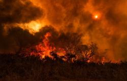 Vídeo que circulam na internet mostra agentes do ICMBio ateando fogo em área verde